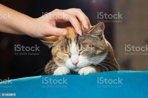 Hand of person stroking head of cute ginger cat picture id914633870?b=1&k=6&m=914633870&s=612x612&h=byre1nuwthiu2bsazlycuagrzsysduudqfsflifbsyw=