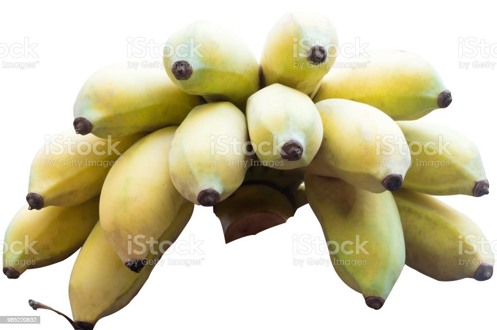 A hand of ripe cultivated bananas on white background with clipping path zbiór zdjęć royalty-free