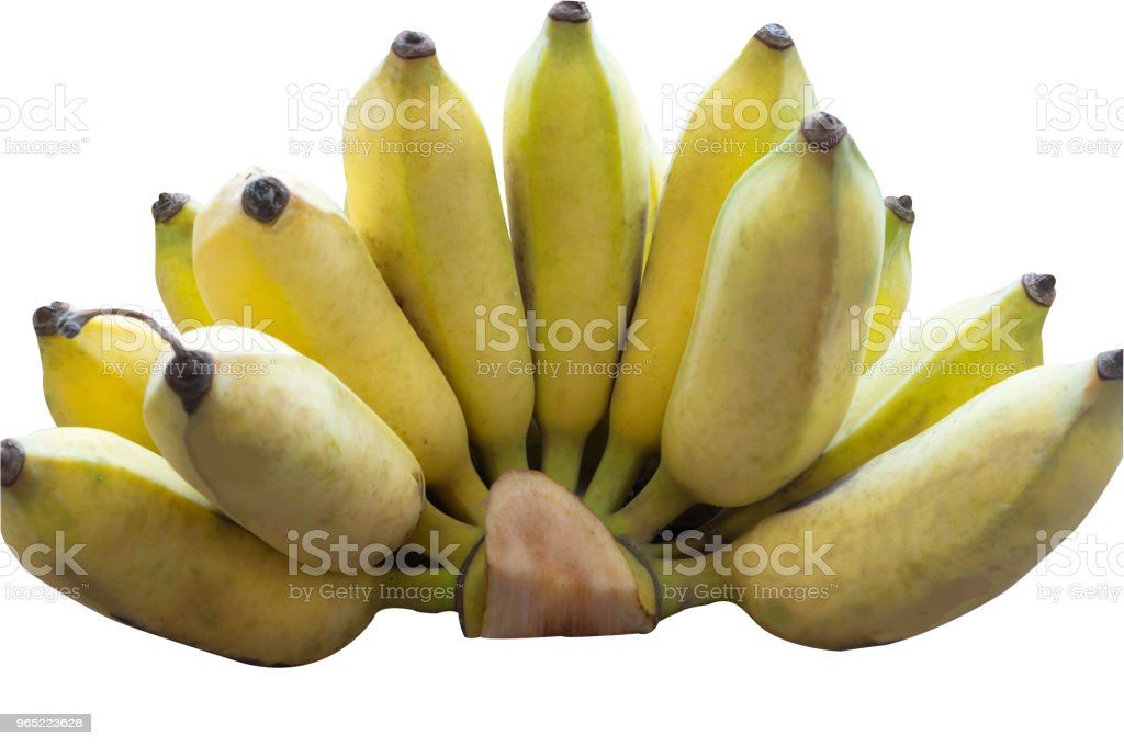 A hand of ripe cultivated bananas on white background with clipping path royalty-free stock photo