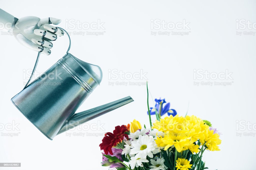 hand of robot holding watering pot and beautiful bouquet of flowers isolated on white zbiór zdjęć royalty-free