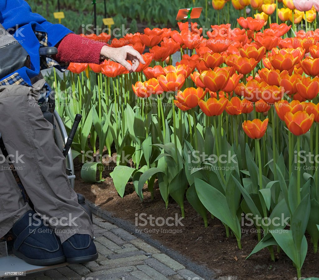 Hand of senior woman in wheelchair touching red flower royalty-free stock photo