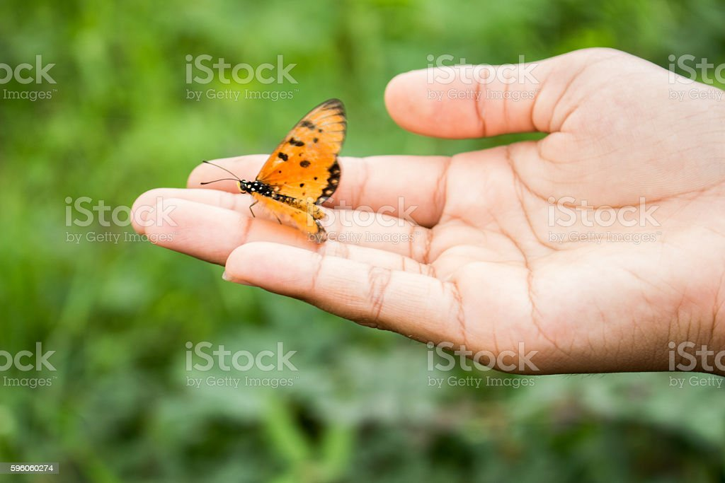 Hand of the girl with a butterfly. royalty-free stock photo