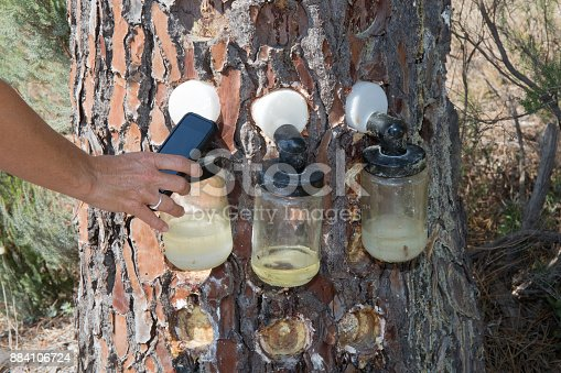 istock Hand of woman collecting information on Bags attached pine tree 884106724