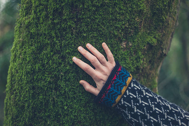 Hand of woman on tree with moss stock photo