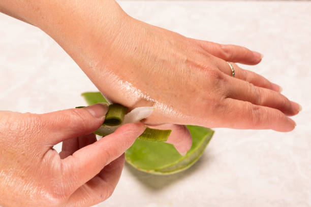 Hand of woman rubbing a piece of Aloe Vera on her other hand stock photo