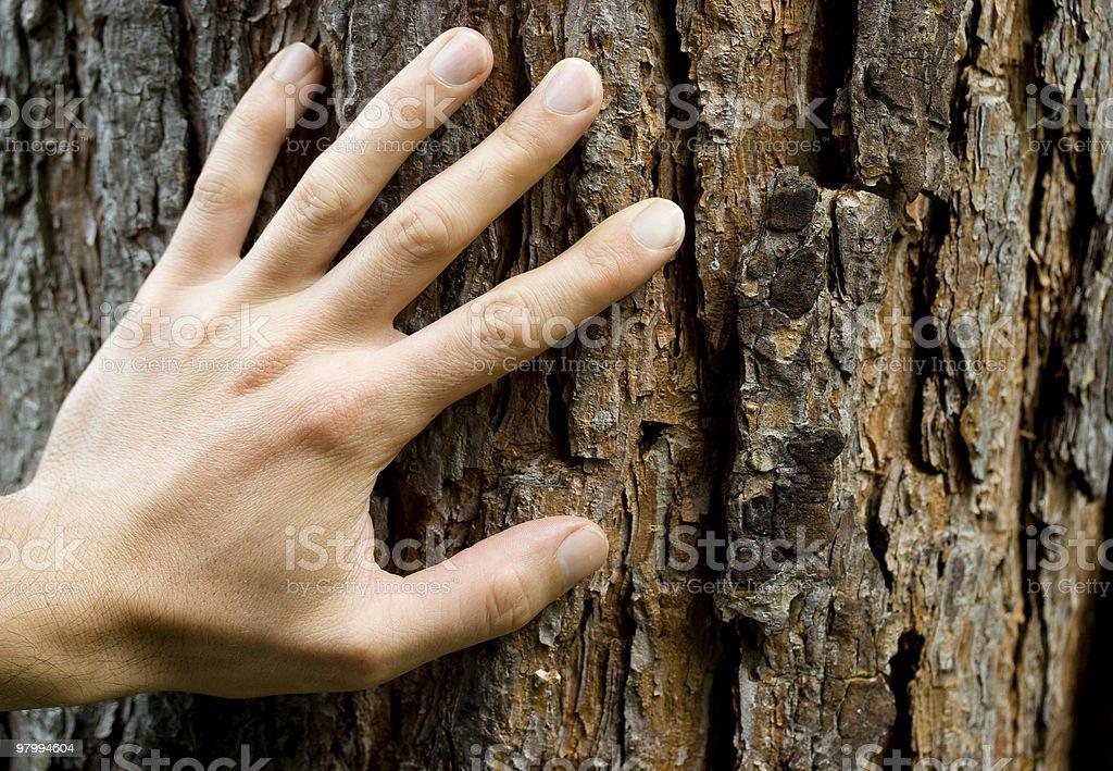 Hand on bark. royalty-free stock photo