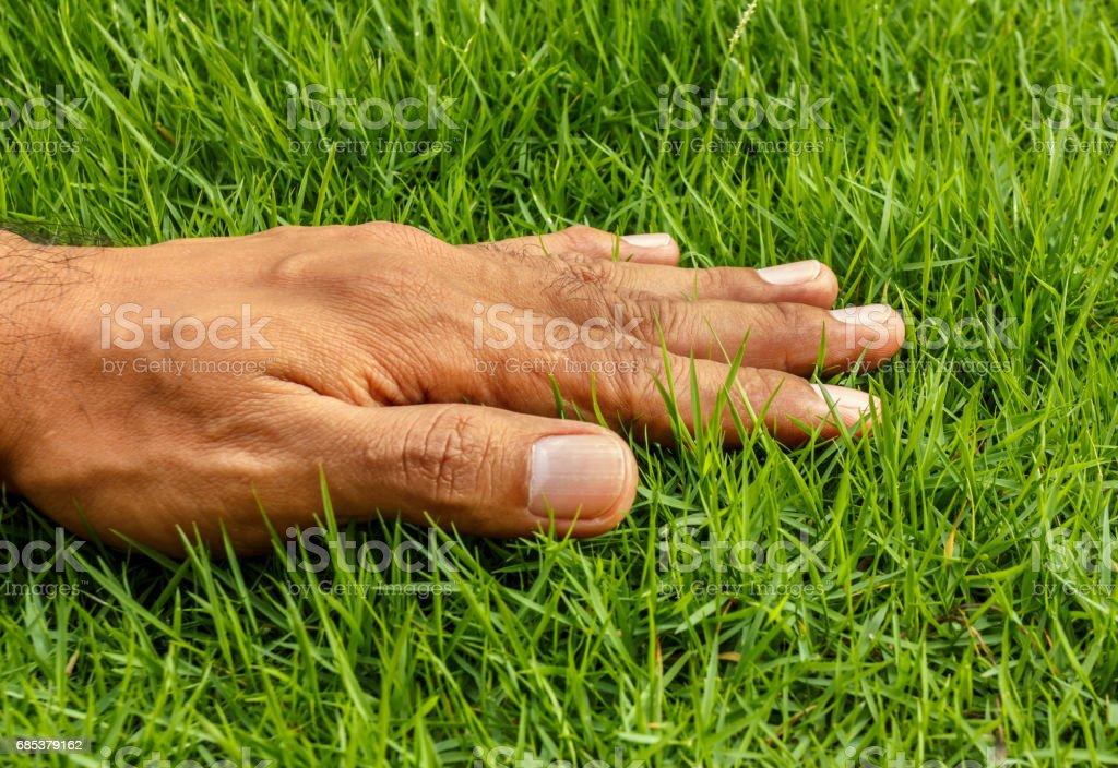 Hand on green lush grass foto de stock royalty-free