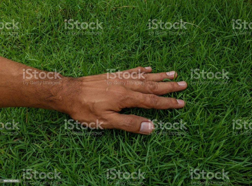 Hand on green lush grass foto de stock royalty-free