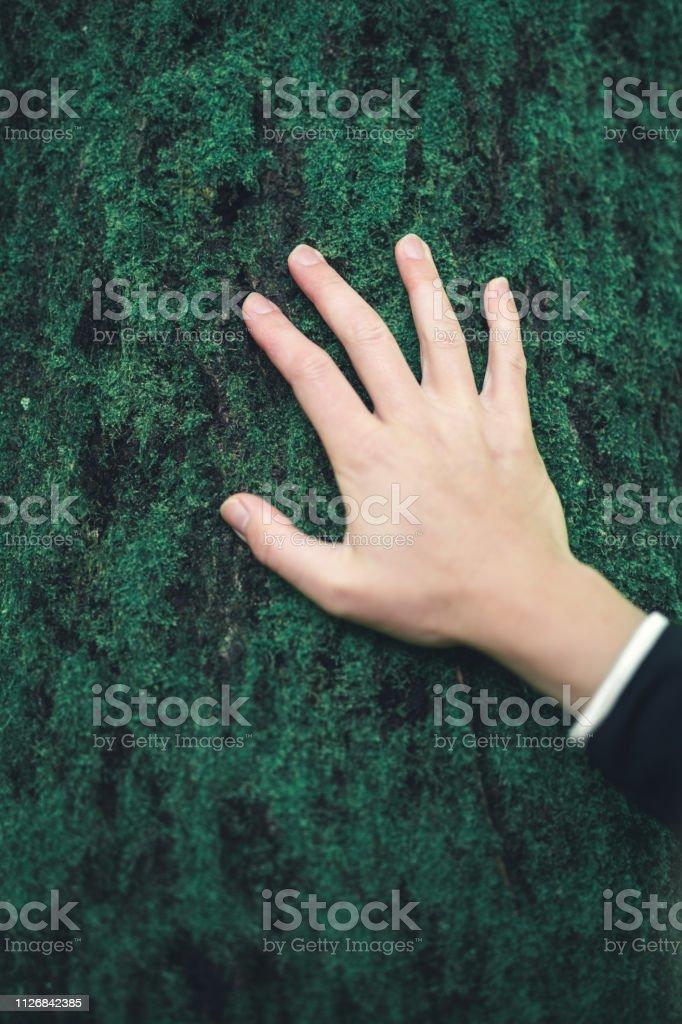 Hand On Tree stock photo