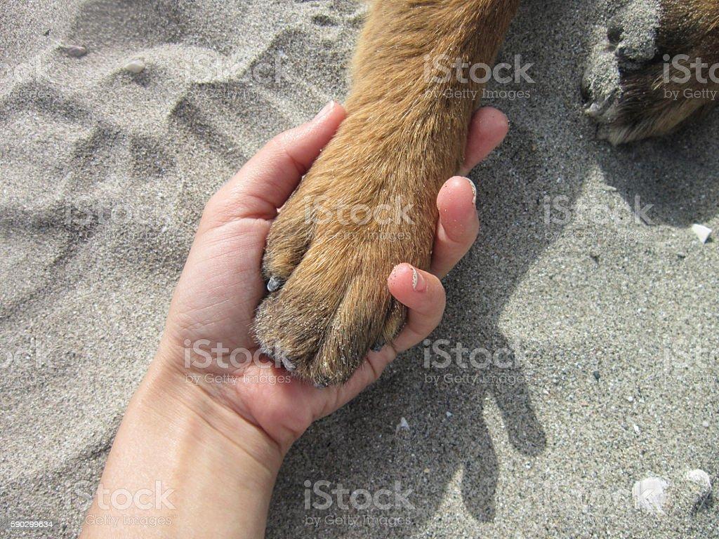 Hand & Paw Стоковые фото Стоковая фотография