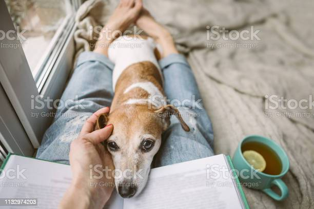 Hand petting dog real friendship woman legs in jeans a book and a picture id1132974203?b=1&k=6&m=1132974203&s=612x612&h=u9dsdqf3l 86zt7tqxbwyzkw2dzxeuusbide tyciec=