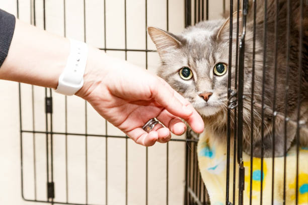 Hand Petting Scared Cat in Cage Hand of a woman petting a scared and shy cat that is lying in a cage at a shelter sheltering stock pictures, royalty-free photos & images