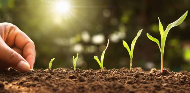 Handpflanzung von Markensamen im Gemüsegarten bei Sonnenschein – Foto