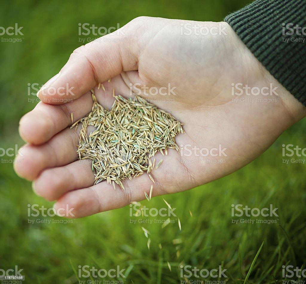 Hand planting grass seeds stock photo