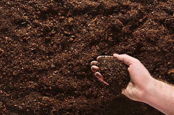 Hand planting seeds on a natural soil background – Foto