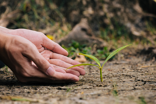 1139475964 istock photo Hand planting the seedlings into the soil 1163493078