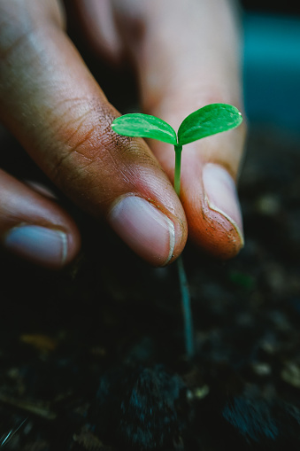 637583458 istock photo hand planting young tree in soil 1071016834