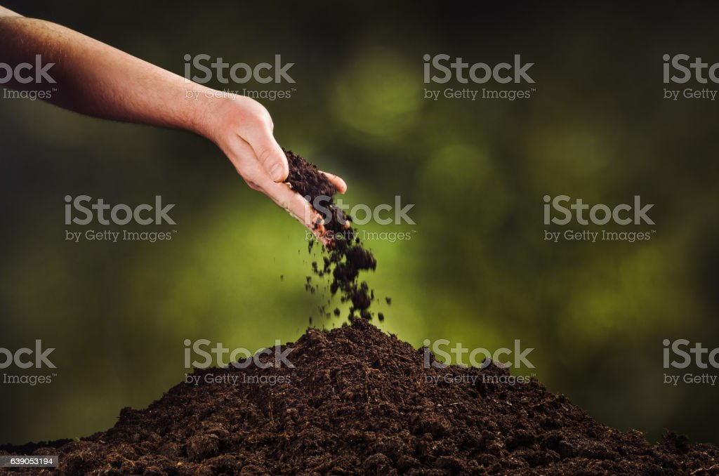 Hand pouring black soil on green plant bokeh background stock photo