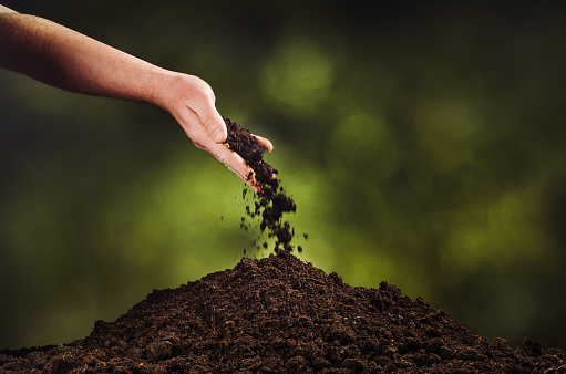 Hand Pouring Black Soil On Green Plant Bokeh Background Stock Photo - Download Image Now
