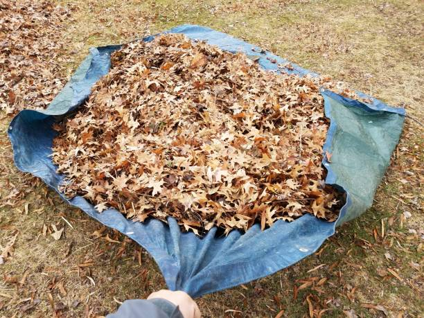 hand pulling blue tarp and fallen brown leaves in autumn or winter stock photo