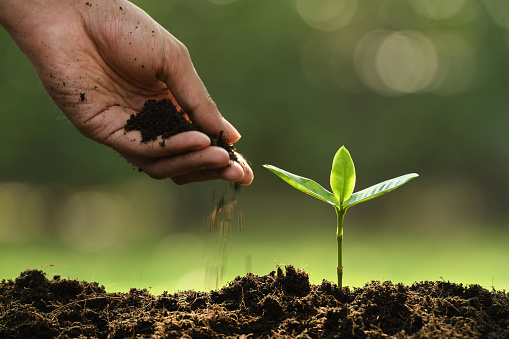 1089961140 istock photo Hand putting soil around young plant on nature background 1089961198