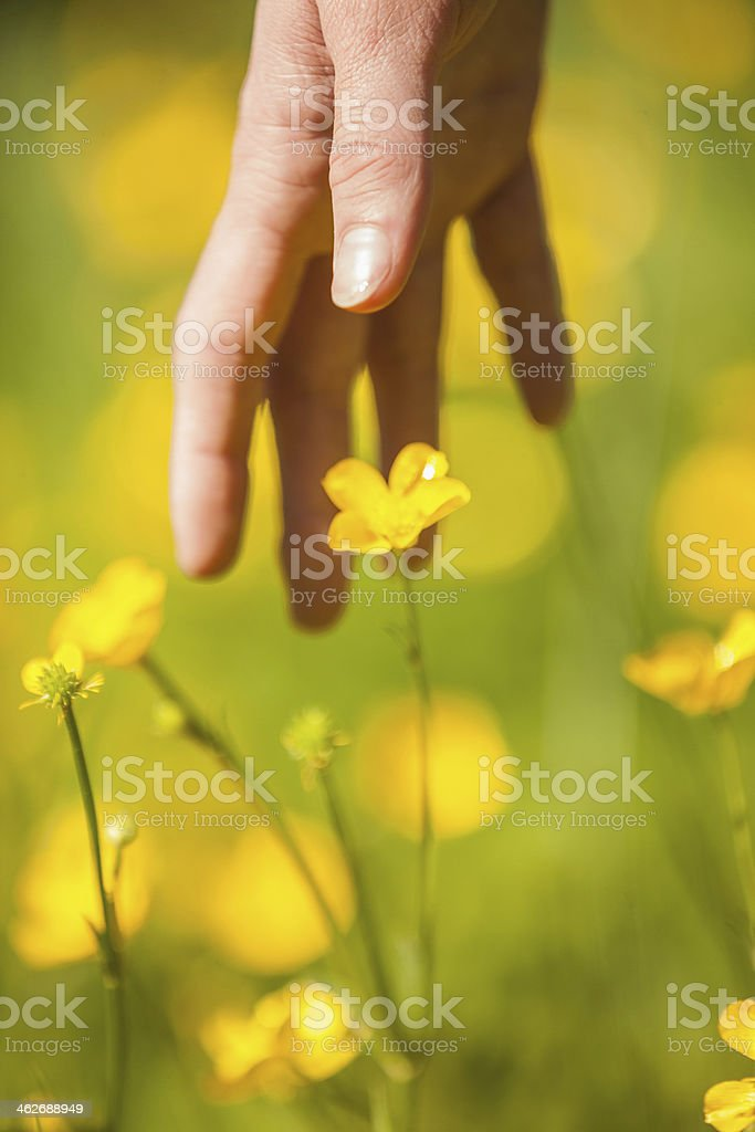 Hand reaching down to a yellow flower in  meadow stock photo