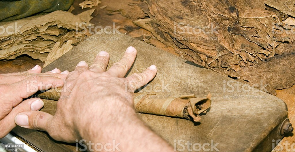 Hand Rolling The Cigar stock photo