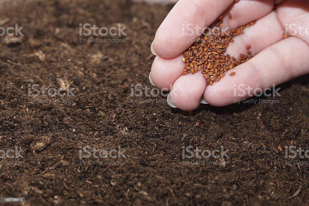 Hand seedling royalty-free stock photo
