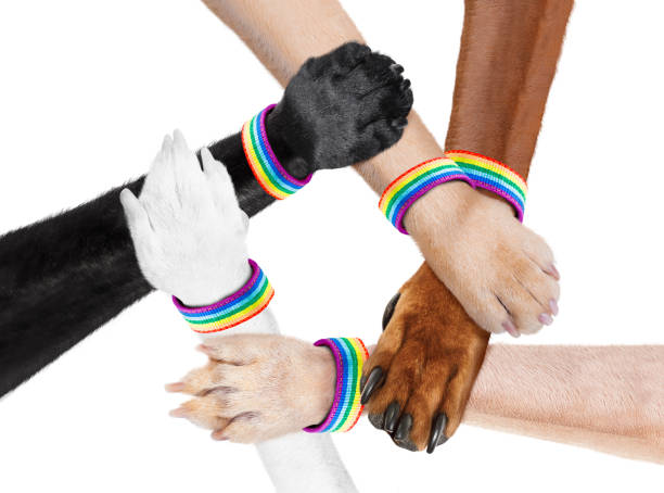 hand shaking dog animal paws stock photo