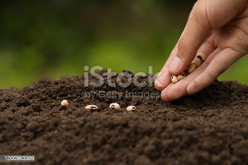 Hand Sowing seeds to losing soil. growth vegetable at home and backyard garden, Retirement hobby and gardening concept.