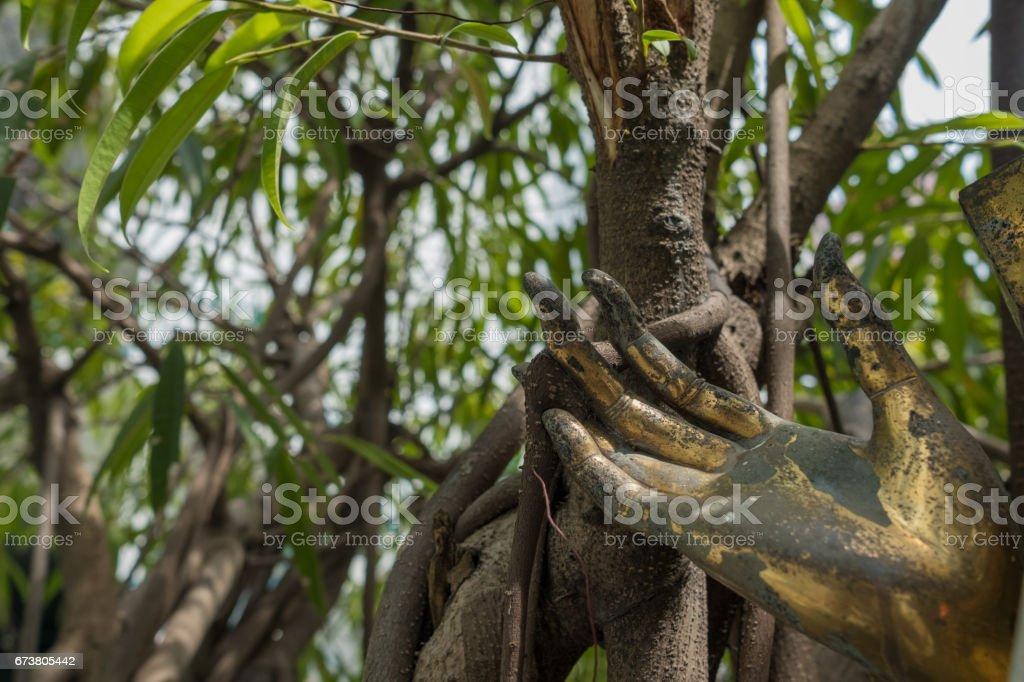 statue de main sur les arbres. (Mise au point sélective) photo libre de droits