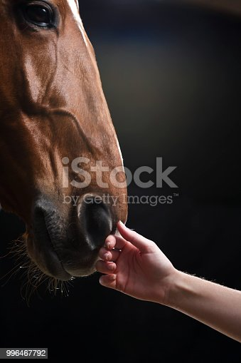 Loving touch - horse and the owner. Female hand stroking hors on the head.