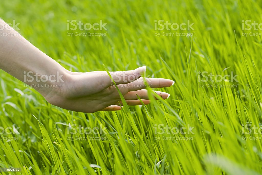 Hand sweeping across field of grass royalty-free stock photo