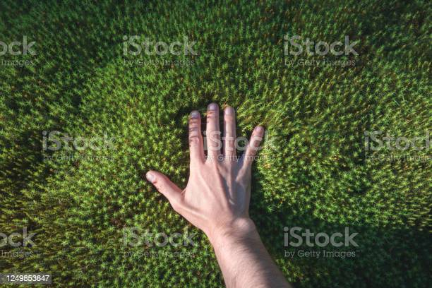 Photo of A hand touches a green forest moss. Point of view. Sunlight