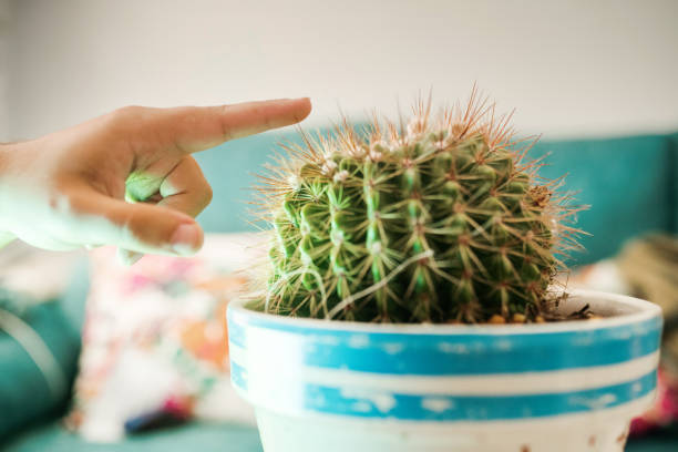 Hand touching a spiked cactus plant stock photo