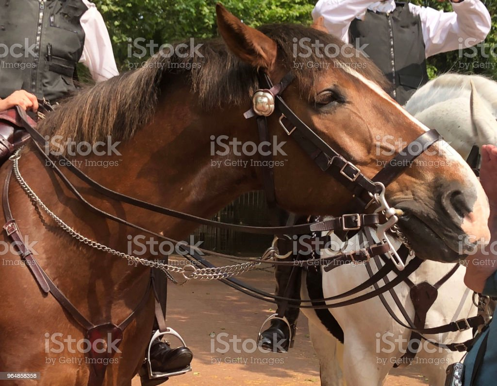 Hand touching horse nose royalty-free stock photo