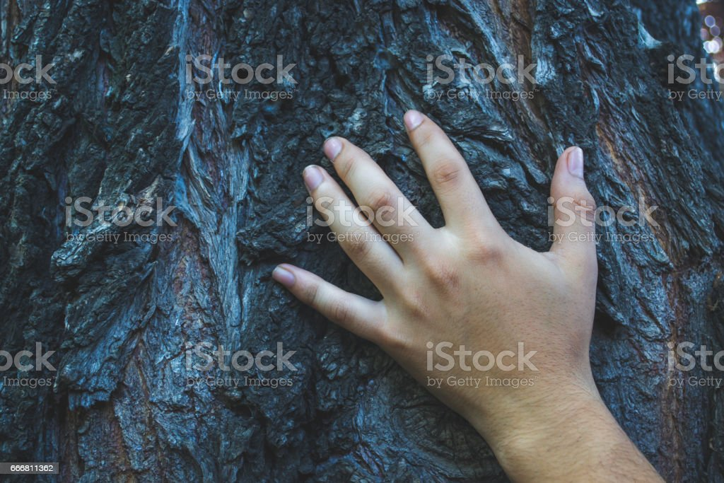 Hand touching the tree stock photo