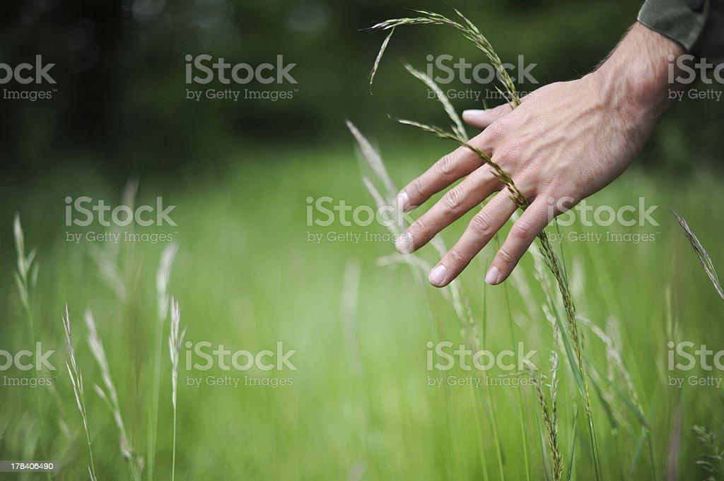 Hand durch wheat field – Foto