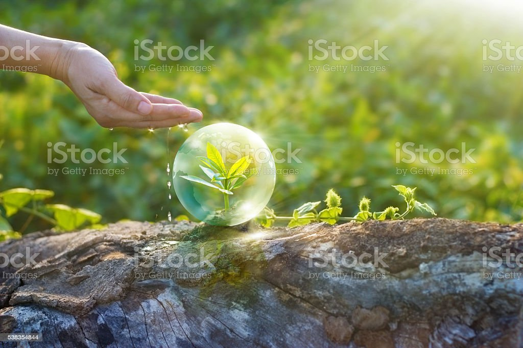 hand watering and protecting globe of young tree resting stock photo