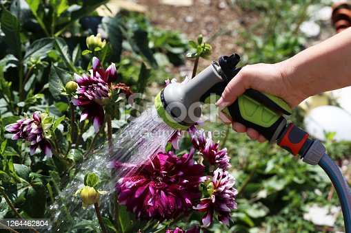Hand watering flowers in the garden from a hose.