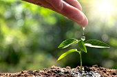 ้hand watering small tree in the garden with sunshine.