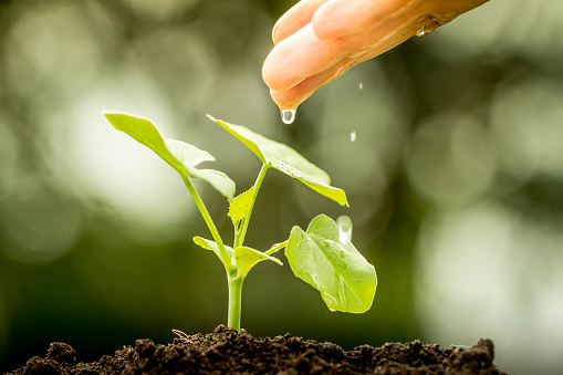 486530452 istock photo hand watering young plant on green bokeh background 486529694