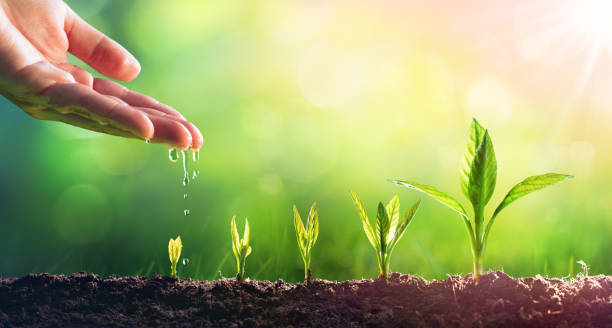 hand in wachsenden jungen pflanzen gießen - heben stock-fotos und bilder