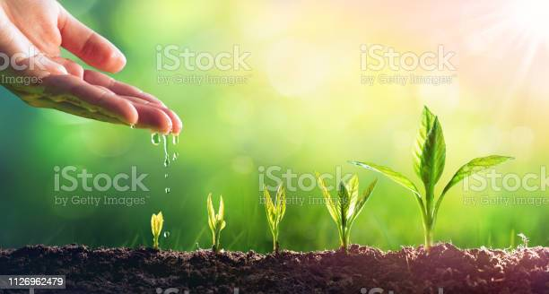 Photo of Hand Watering Young Plants In Growing