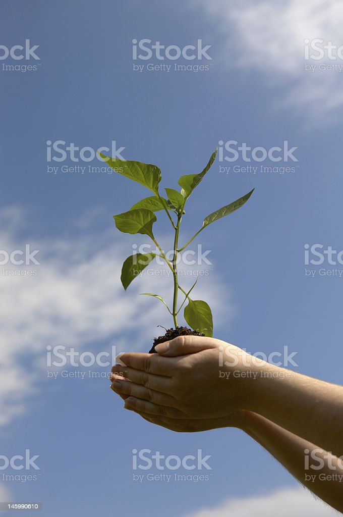 Hand with a green plant on background of the sky royalty-free stock photo