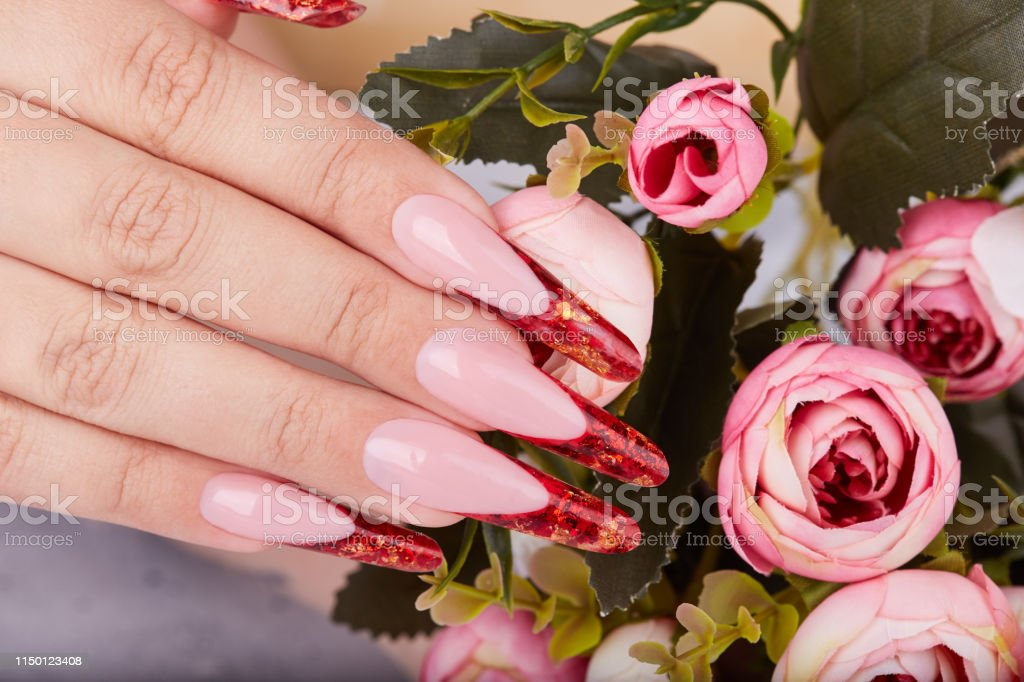 Hand with long red artificial french manicured nails and pink rose...