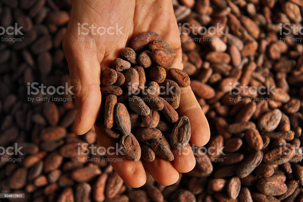 Hand with Cocoa Beans - Overhead stock photo