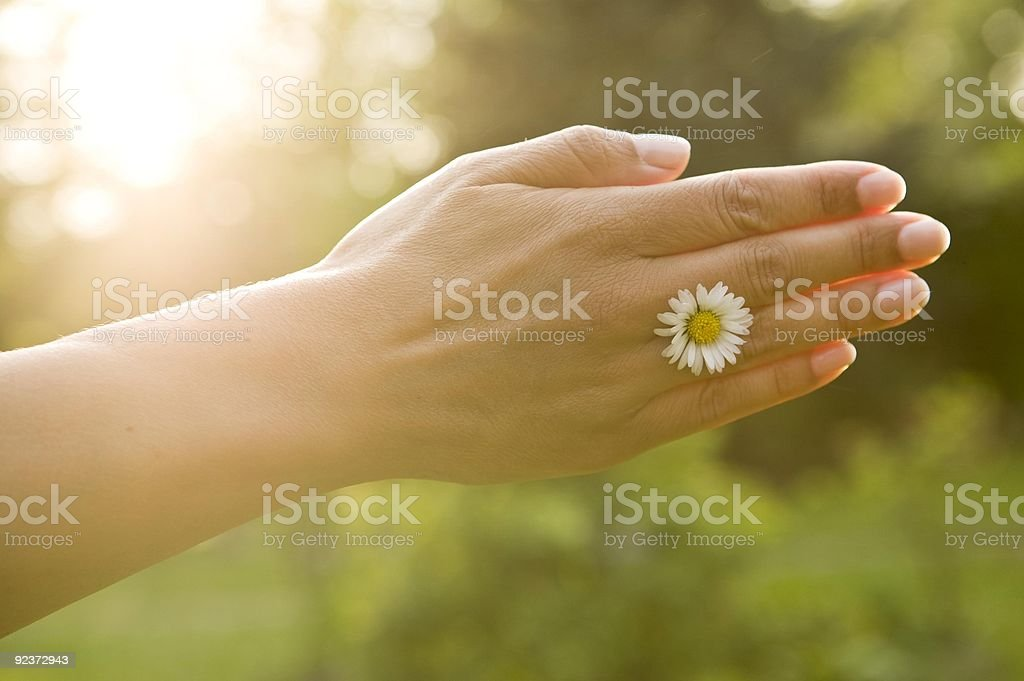 hand with flower royalty-free stock photo