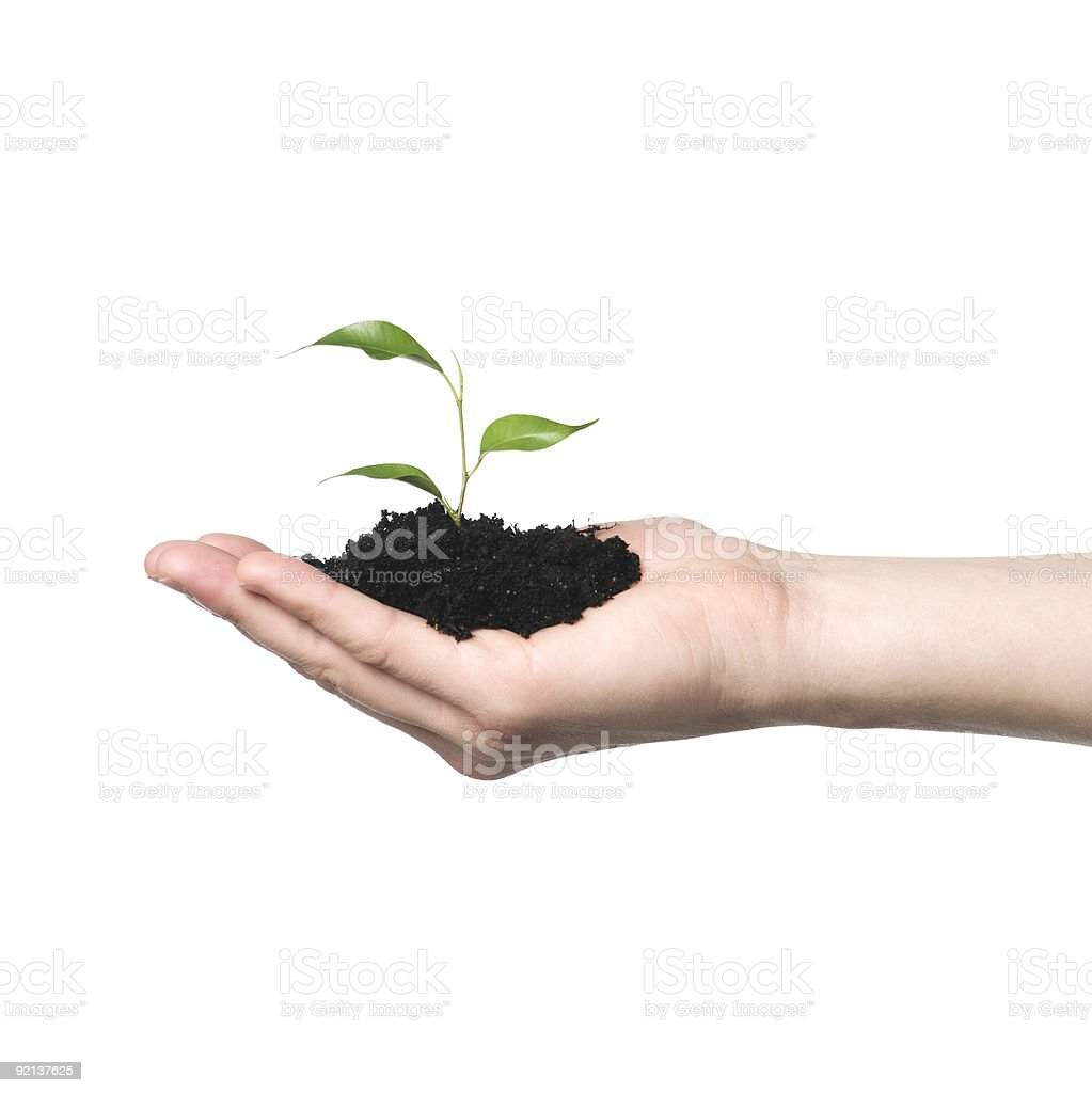 Hand with growing plant royalty-free stock photo