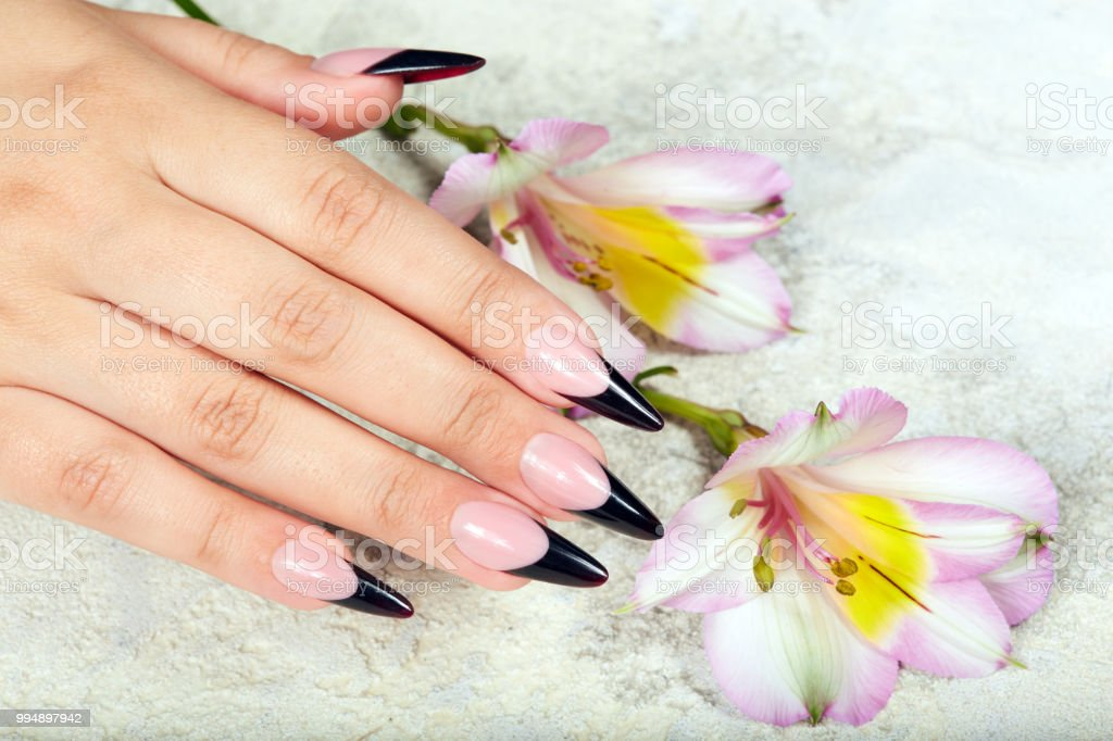 Hand with long artificial black french manicured nails and lily...